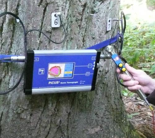 tomograf copaci, analiza copac, stare de sanatate copaci